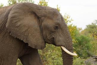 Elephant DSC00208